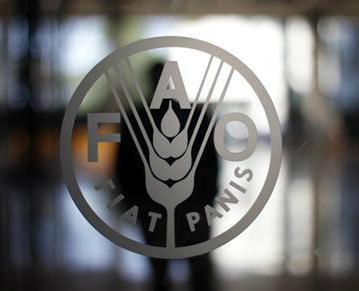 ФАО обеспокоена распространенностью недоедания в Кыргызстане и Узбекистане