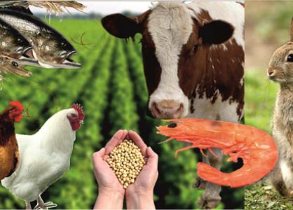 Американские транснациональные компании проявили интерес к животноводческой отрасли Казахстана