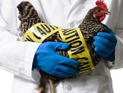 В Казахстане заявили о вспышке птичьего гриппа